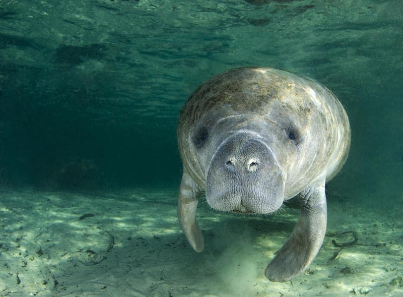 Pin blue lagoon bahamas on pinterest for Us fish and wildlife