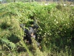 Photo of a hidden adversary